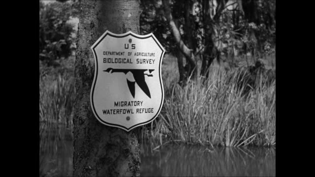 vídeos y material grabado en eventos de stock de grass fields trees bird conservatory. waterfowl birds in flight. migratory waterfowl refuge.' waterfowls flying. dixie animal rights. american south - 1930 1939