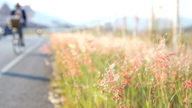 grass flower at roadside. - roadside stock videos and b-roll footage