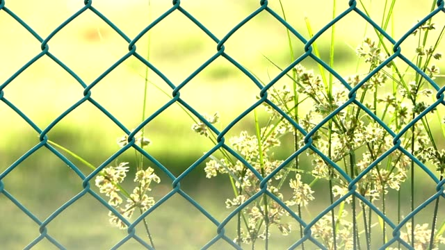 grass flowers behind mesh fence - fence stock videos & royalty-free footage