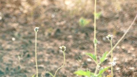 gräs blommor blåser i vinden - varmt ljus bildbanksvideor och videomaterial från bakom kulisserna