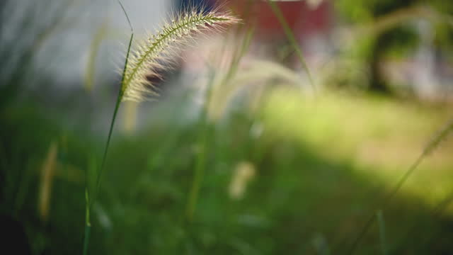 grass flowers blown in the wind, slow motion video - long stock videos & royalty-free footage