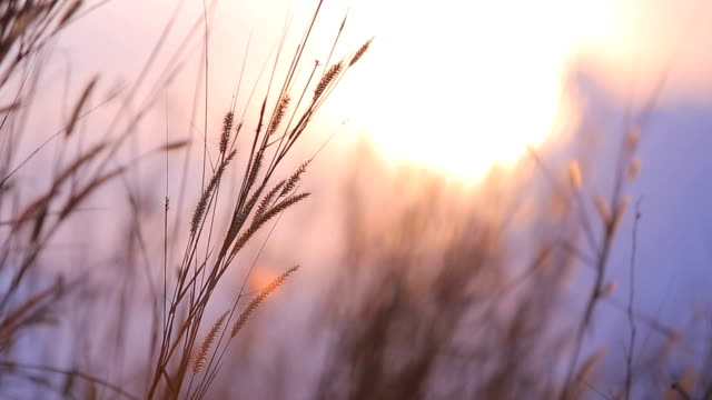 grass  fountain in morning - pastel stock videos & royalty-free footage