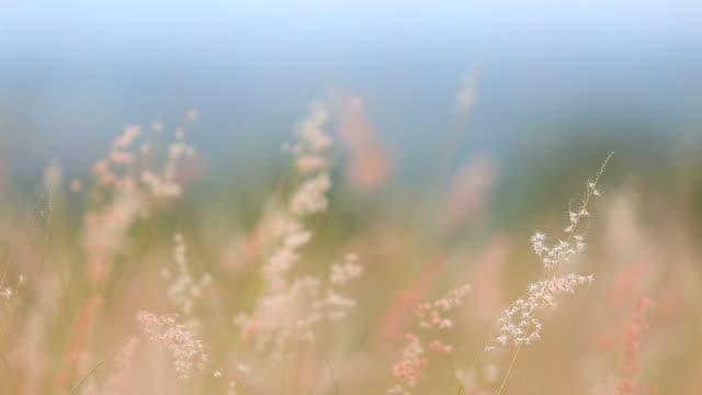 芝生での朝の噴水