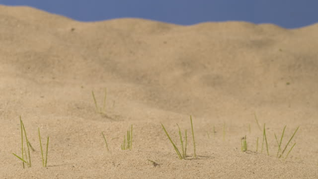 t/l grass germinating and growing in sandy substrate - germinating stock videos & royalty-free footage