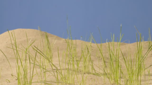 T/L Grass growing in sandy substrate