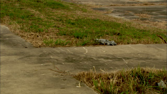 Grass grows around cracked concrete.