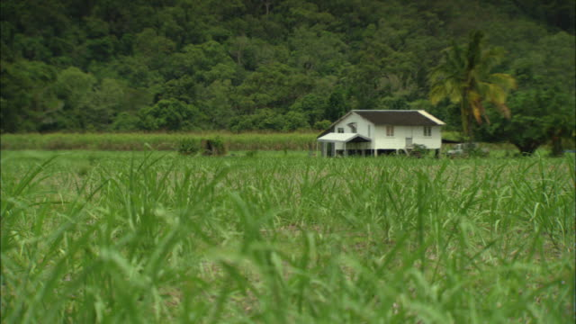 grass grows near a white farmhouse. - farmhouse stock videos & royalty-free footage