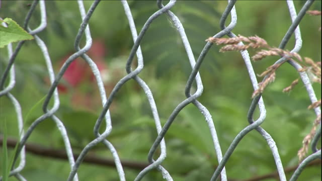 grass grows through a chain link fence. - tassel stock videos & royalty-free footage