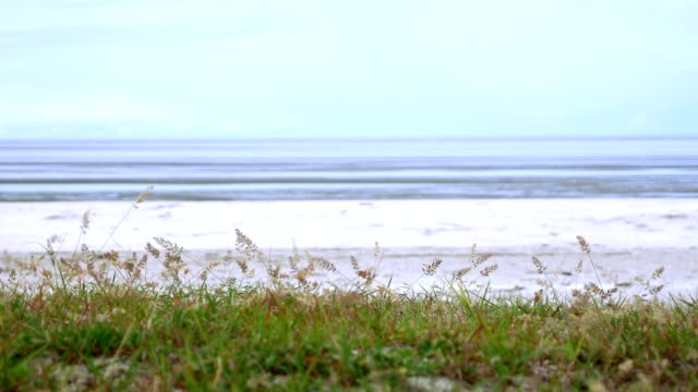 grass in blue sky . - marram grass stock videos and b-roll footage