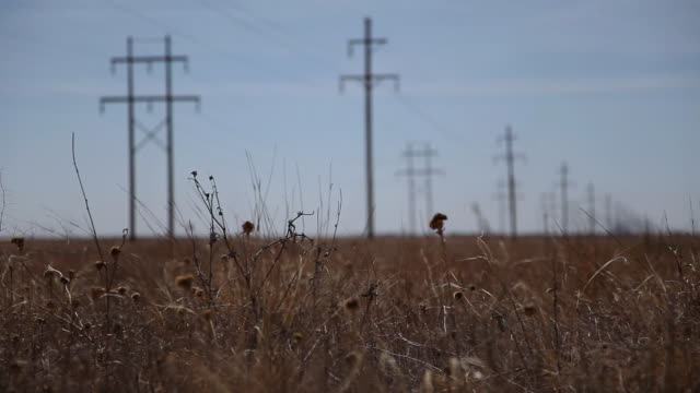 ms grass in foreground and electricity poles in distance / hooker, ok, united states  - oklahoma stock videos & royalty-free footage