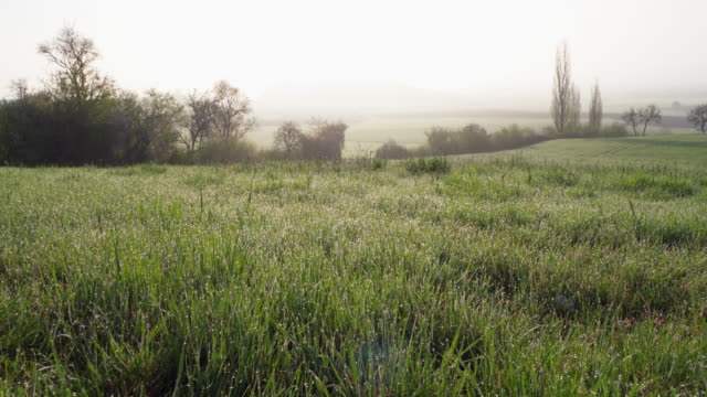 grass in meadow with dew drops landscape at back lit. bavaria, germany. - 草地点の映像素材/bロール