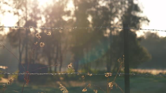 Grass in de ochtendzon