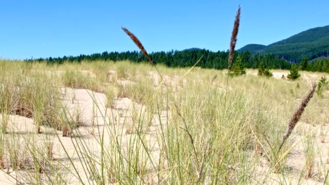Grass in sand dunes near forest at Sand Lake Oregon Coast Oregon 25