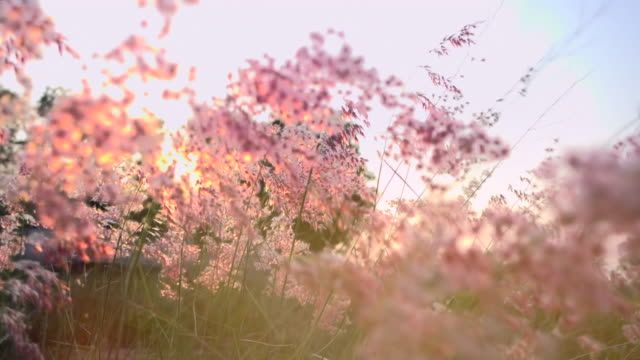 vídeos de stock, filmes e b-roll de grama em luz do sol slow motion - flor