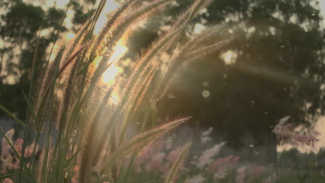 grass in sunset light slow motion with ray dust - zona erbosa video stock e b–roll