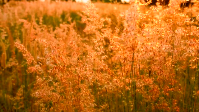 grass in the morning - grove stock videos & royalty-free footage
