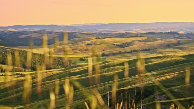 ds 芝生で、トスカーナの田園風景 - blade of grass点の映像素材/bロール