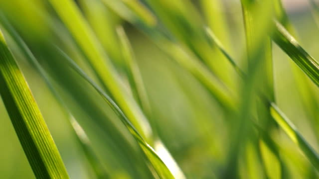 grass in wind - green color stock videos & royalty-free footage