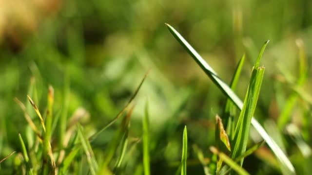 grass in wind - blade of grass stock videos and b-roll footage