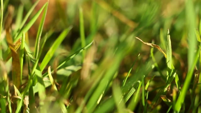 grass in wind - blade of grass stock videos & royalty-free footage