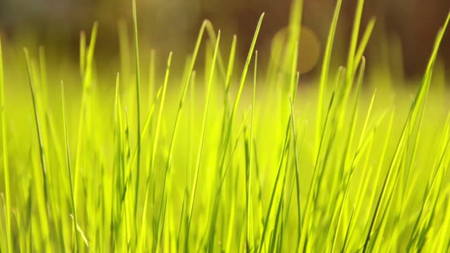 grass in wind - soft focus stock videos & royalty-free footage