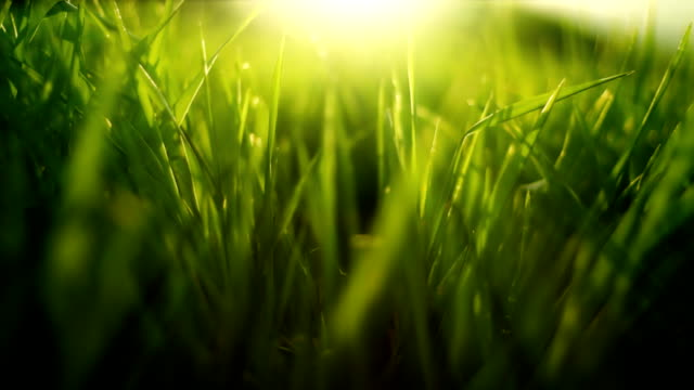 grass in wind (loopable) - environmental conservation stock videos & royalty-free footage