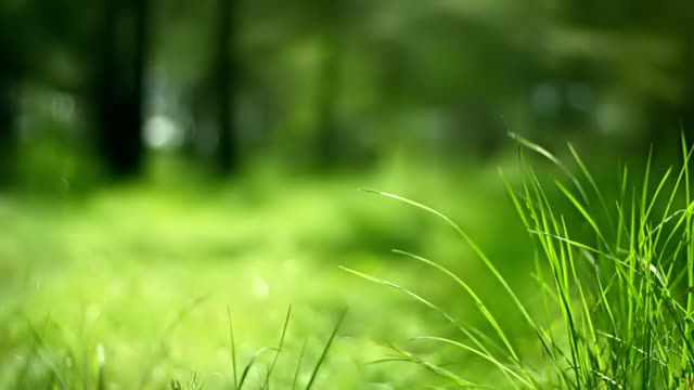 Grass in wind (loopable)
