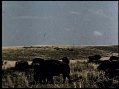 grass is gold - 1 of 13 - andere clips dieser aufnahmen anzeigen 2173 stock-videos und b-roll-filmmaterial