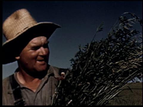 grass is gold - 11 of 13 - andere clips dieser aufnahmen anzeigen 2173 stock-videos und b-roll-filmmaterial