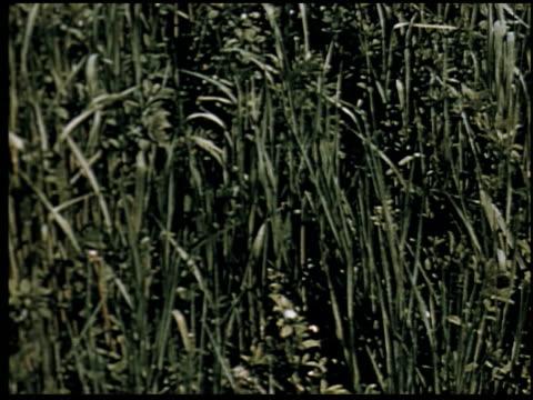 grass is gold - 3 of 13 - andere clips dieser aufnahmen anzeigen 2173 stock-videos und b-roll-filmmaterial