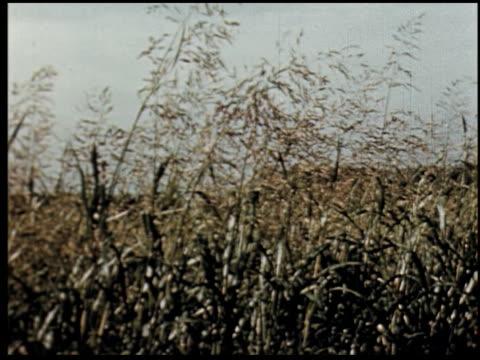 grass is gold - 4 of 13 - andere clips dieser aufnahmen anzeigen 2173 stock-videos und b-roll-filmmaterial