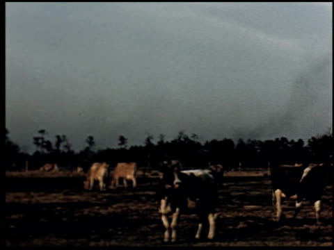 grass is gold - 6 of 13 - andere clips dieser aufnahmen anzeigen 2173 stock-videos und b-roll-filmmaterial