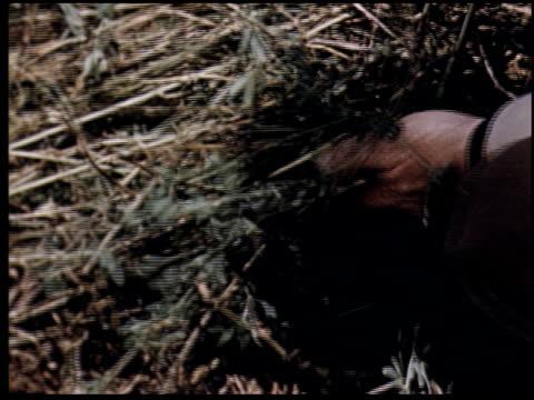 grass is gold - 7 of 13 - andere clips dieser aufnahmen anzeigen 2173 stock-videos und b-roll-filmmaterial