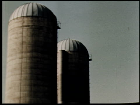 grass is gold - 8 of 13 - andere clips dieser aufnahmen anzeigen 2173 stock-videos und b-roll-filmmaterial
