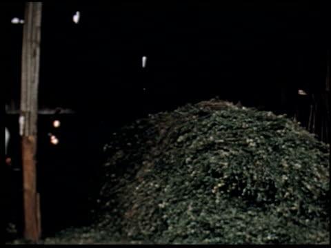 grass is gold - 9 of 13 - andere clips dieser aufnahmen anzeigen 2173 stock-videos und b-roll-filmmaterial