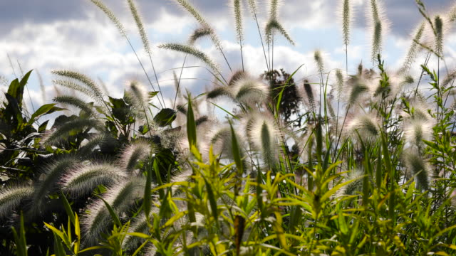 grass moved by wind. flushing meadows corona park, queens, new york us. - flushing meadows corona park stock videos and b-roll footage