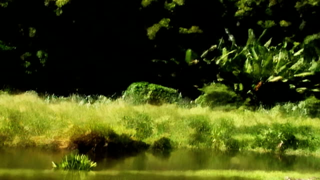 grass on a pond's shore sways in a gentle breeze like a moving impressionistic painting. - impressionism stock videos & royalty-free footage