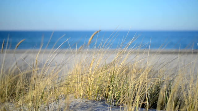 grass on beach dunes along baltic sea at sunset. - sand dune stock videos & royalty-free footage