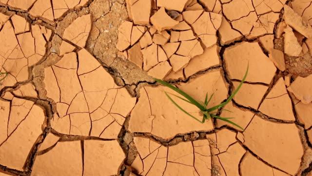 Herbe sur sol sec