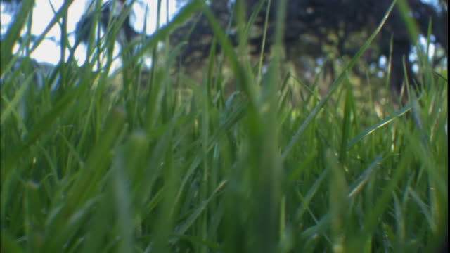 cu, pan, grass on field, california, usa - blade of grass stock videos and b-roll footage
