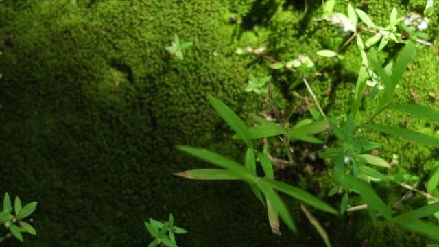 erba sul muschio con la decadente del tempo della luce solare - low angle view video stock e b–roll