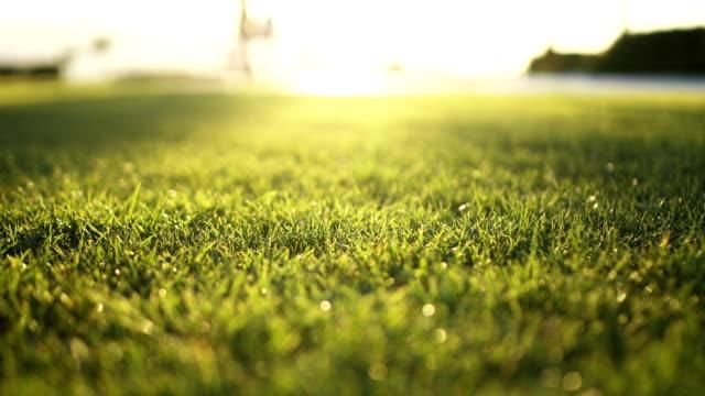 stockvideo's en b-roll-footage met gras op park - softfocus