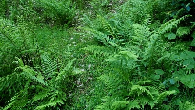 L'herbe sur le sol de la forêt en HD