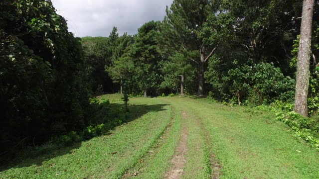 grass path in the middle of the tropical forest - footpath stock-videos und b-roll-filmmaterial