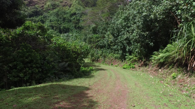 grass path in the middle of the tropical forest - 枝 植物部分 個影片檔及 b 捲影像