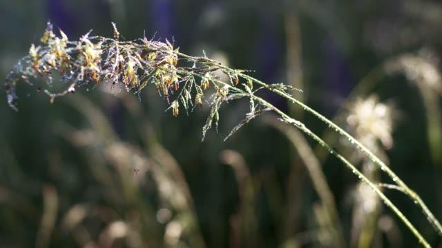 vídeos de stock e filmes b-roll de grass pollen - pólen
