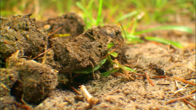 Grass surrounds a large flop of animal dung.