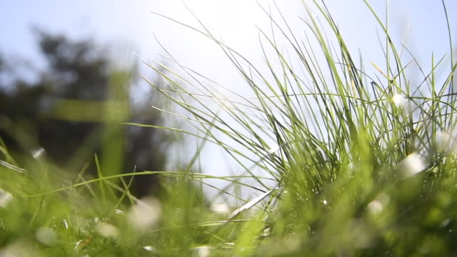 grass swaying in the wind in slow motion - blade of grass stock videos & royalty-free footage
