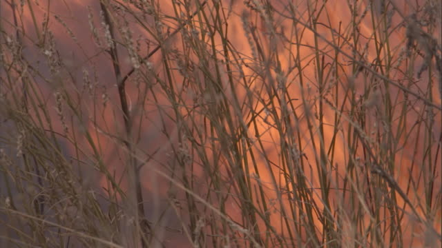 grass sways back and forth as a wildfire rages. available in hd. - hd format stock videos & royalty-free footage