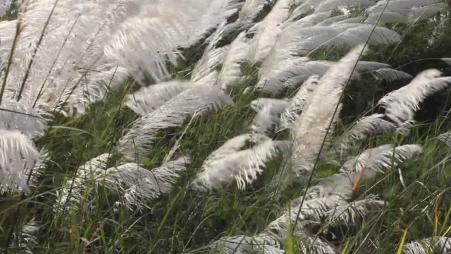 grass undergrowth. - tracery stock videos and b-roll footage